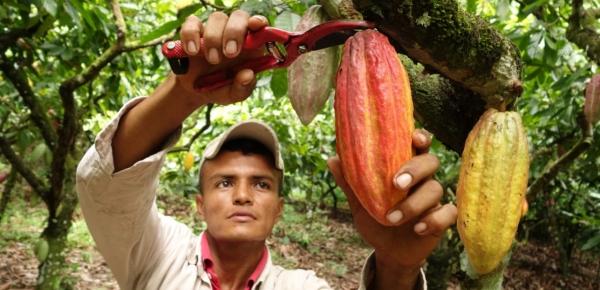 Cancillería apoya a siete centros de acopio de cacao en Tumaco
