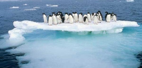 Colombia Adhirió al Protocolo al Tratado Antártico sobre Protección del Medio Ambiente, su Apéndice